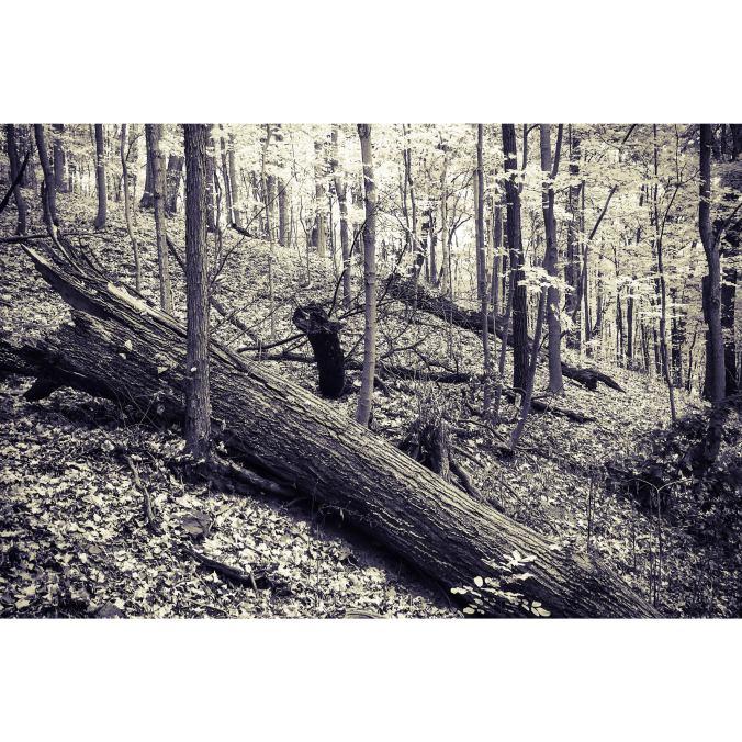 Forest B?W Fall 2015 B:W